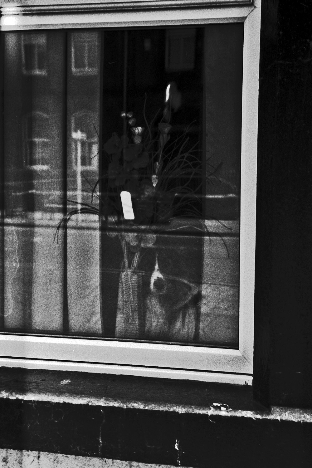 dog looks out of window egremont street photography uk photographer kevin shelley prints for sale leica m2 jupiter 8 50 f2