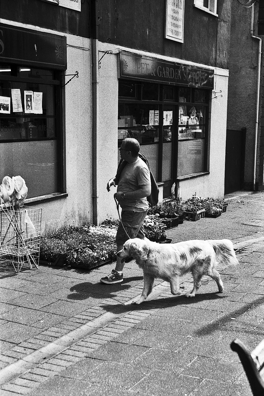 man walks labrador egremont street photography uk photographer kevin shelley prints for sale leica m2 jupiter 8 50 f2