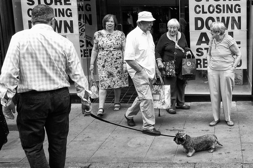 The Dog in Chester with a Ricoh WG-5